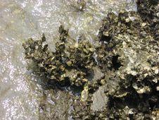 Free Water, Mineral, Rock, Seaweed Stock Photo - 125016260