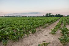 Free Agriculture, Field, Crop, Farm Royalty Free Stock Photos - 125016608