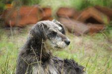 Free Dog Breed, Dog, Dog Like Mammal, Grass Stock Image - 125016931