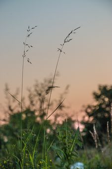 Free Sky, Plant, Grass, Grass Family Stock Images - 125017004