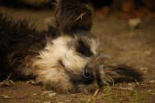 Free Dog Breed, Dog, Dog Like Mammal, Snout Royalty Free Stock Image - 125017036