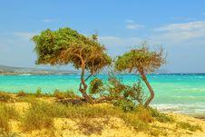 Free Vegetation, Ecosystem, Sea, Tropics Royalty Free Stock Photos - 125017268