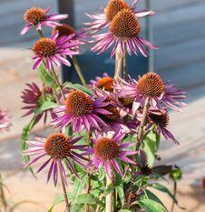 Free Purple Flower Stock Image - 125181141