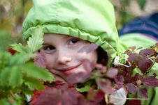 Smiling Little Girl Hiding Behind Leaves Royalty Free Stock Image