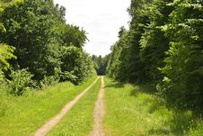 Free Vegetation, Path, Road, Ecosystem Stock Photos - 125456423