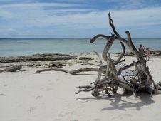 Free Driftwood, Shore, Sea, Coastal And Oceanic Landforms Royalty Free Stock Photo - 125456465