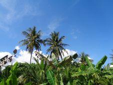 Free Sky, Vegetation, Tree, Palm Tree Stock Photography - 125456492
