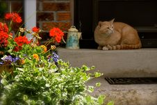 Free Cat, Plant, Flower, Small To Medium Sized Cats Stock Image - 125456551