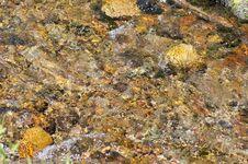 Free Rock, Seaweed, Water, Reef Royalty Free Stock Photography - 125456667