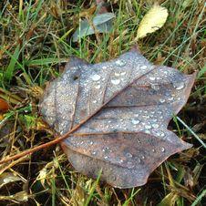 Free Leaf, Plant, Plant Pathology, Grass Royalty Free Stock Photos - 125457168