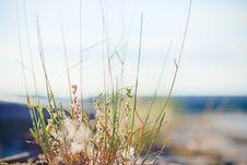 Free Sky, Sea, Water, Grass Stock Image - 125457341