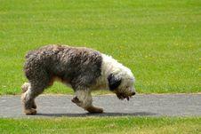 Free Dog Breed, Dog Like Mammal, Dog, Grass Stock Photo - 125595830
