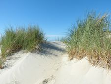 Free Ecosystem, Sand, Grass, Dune Stock Image - 125595921