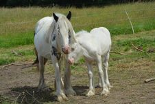 Free Horse, Mare, Horse Like Mammal, Pasture Royalty Free Stock Images - 125596109