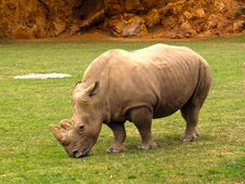 Free Rhinoceros, Terrestrial Animal, Fauna, Mammal Royalty Free Stock Images - 125596119