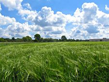 Free Grassland, Sky, Field, Crop Stock Images - 125596264