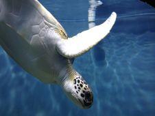 Free Sea Turtle, Turtle, Water, Loggerhead Stock Photos - 125596313
