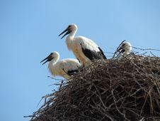 Free Bird, Stork, White Stork, Ciconiiformes Stock Photography - 125596482