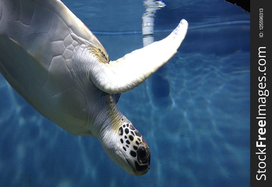 Sea Turtle, Turtle, Water, Loggerhead