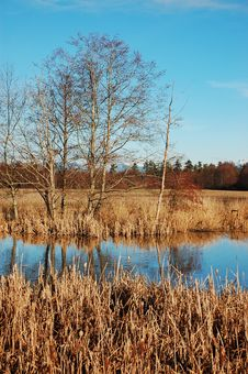 Free Winter Wetland Stock Photography - 12566882