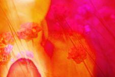 Free Flower, Red, Yellow, Orange Stock Photography - 125839852