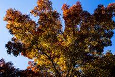 Free Sky, Tree, Nature, Leaf Stock Photo - 125839890