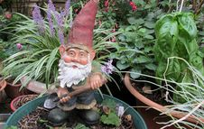 Free Garden Gnome, Lawn Ornament, Plant, Statue Royalty Free Stock Photo - 125840085