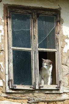 Free Window, Cat, Small To Medium Sized Cats, Door Stock Photo - 125840180