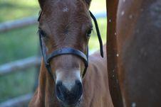 Free Horse, Fauna, Horse Like Mammal, Snout Stock Photos - 125840213