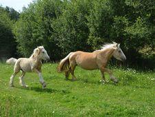 Free Horse, Pasture, Fauna, Horse Like Mammal Stock Image - 125840261