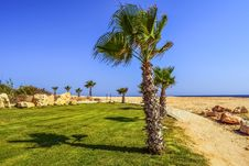 Free Sky, Palm Tree, Arecales, Tree Royalty Free Stock Images - 125840319