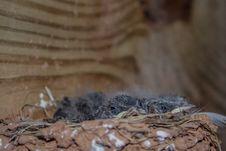 Free Fauna, Bird Nest, Nest Stock Image - 125840561
