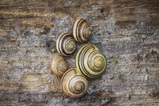 Free Snail, Snails And Slugs, Sea Snail, Schnecken Royalty Free Stock Photos - 125840618