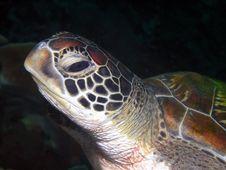 Free Turtle, Sea Turtle, Loggerhead, Reptile Stock Photos - 125840953