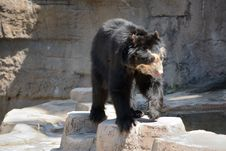 Free Bear, American Black Bear, Brown Bear, Zoo Stock Photo - 125934380