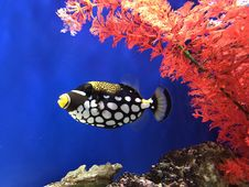 Free Marine Biology, Fish, Coral Reef Fish, Coral Reef Royalty Free Stock Photography - 125934537