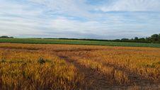 Free Field, Crop, Plain, Prairie Royalty Free Stock Images - 125934549