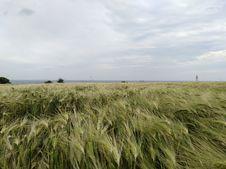 Free Ecosystem, Grassland, Field, Crop Royalty Free Stock Image - 125934606