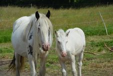 Free Horse, Pasture, Horse Like Mammal, Mare Royalty Free Stock Photography - 125934647