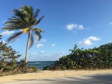 Free Sky, Tropics, Shore, Vegetation Stock Photography - 125934912