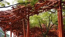 Free Tree, Structure, Pergola, Plant Royalty Free Stock Photo - 125934945