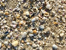 Free Seashell, Pebble, Cockle, Rock Royalty Free Stock Photos - 125934978