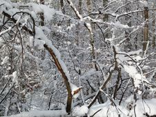 Free Snow, Branch, Tree, Winter Stock Images - 125935184
