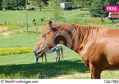 Free Horse Stock Photos - 1261983