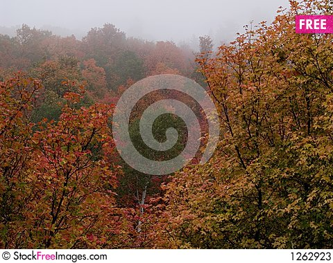 Autumn trees in fog Stock Photo