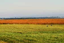 Free Agricultural Autumn Field Royalty Free Stock Photo - 1260015