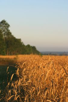 Free Agricultural Autumn Field Stock Photos - 1260043