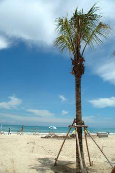Free Beach And Palmtree Stock Photo - 1260280