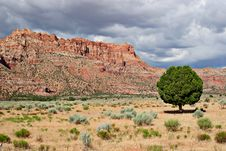 Free Lonely Tree And Red Rocks Stock Photo - 1262120