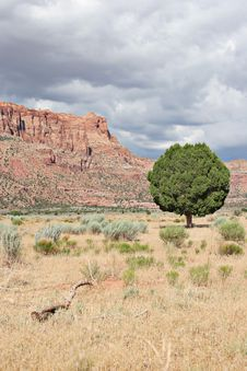 Free Lonely Tree And Red Rocks Stock Images - 1262124